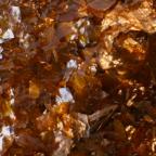 Shellac. Natural. Amber Colour. 1/2 Stone. (7 lbs.)